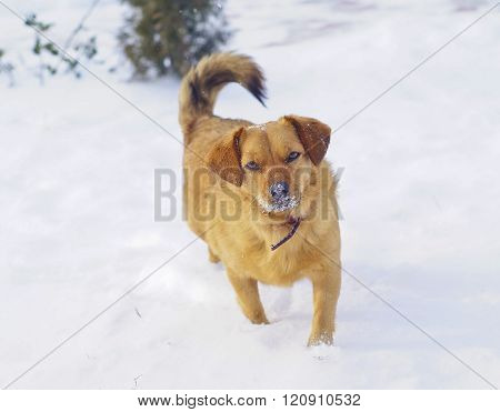 brown shaggy dog standing on the white snow at winter