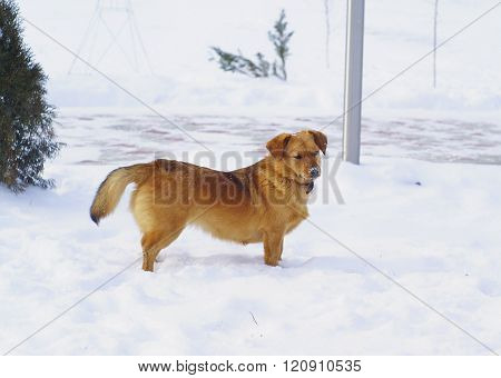 brown shaggy dog standing on the white snow
