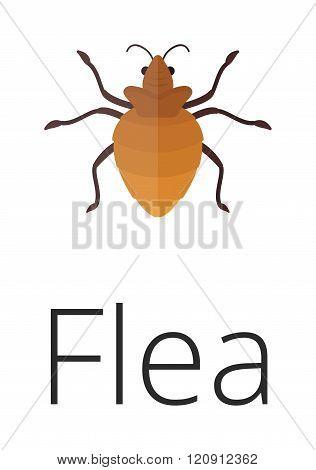 Skin vermin flea