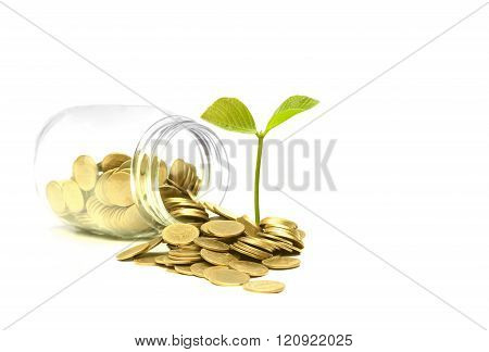 a bottle of golden coins with a young green plant / Business with csr practice