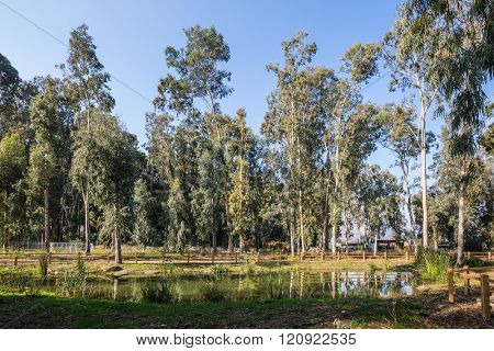 The picturesque park surrounds Lake Hula. The reserve of migratory birds Hula in the Upper Galilee
