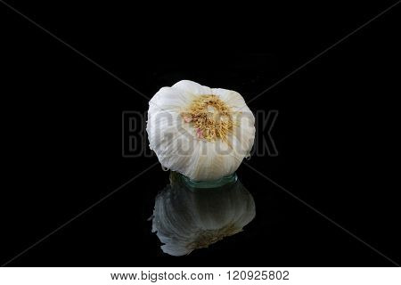 a whole garlic tuber with water on black background