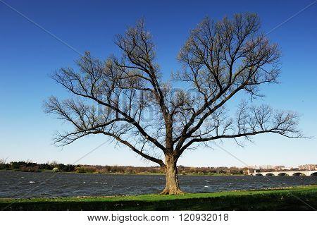 spring tree near river in sunny day