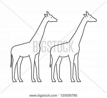 Outline giraffe on a white background. Vector line silhouette giraffe. Modern giraffe icon.