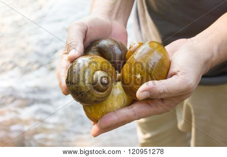 Close Up Man Hands Presenting Big Snails From Waterfall With Water Background