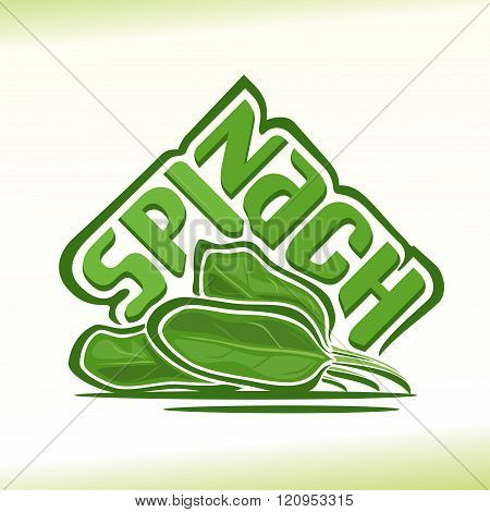 Vector illustration on the theme of spinach