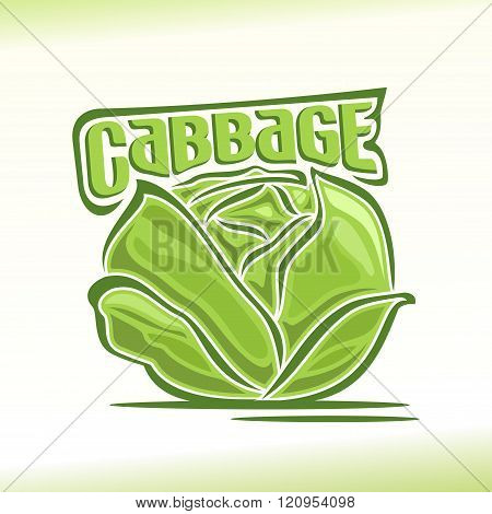 Vector illustration on the theme of cabbage