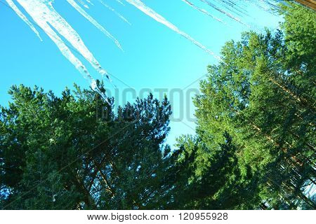 peaks icicles in the blue spring skies