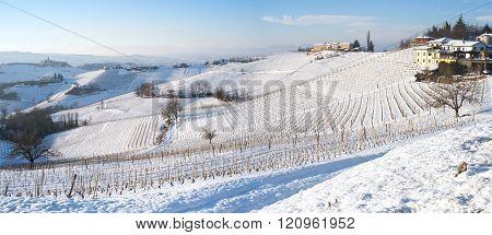 Langhe snowed vineyards, wintertime. Color image