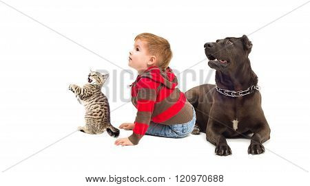 Curious boy, a dog and kitten