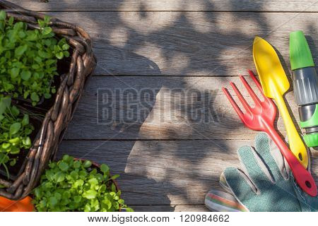 Gardening tools and seedling on garden table. Top view with copy space