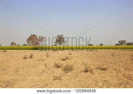 Arid Rajasthan Agricultural Landscape