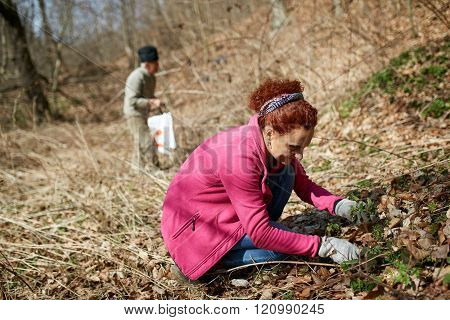 Woman Picking Nettles