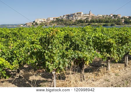 Bages, Village Near Narbonne