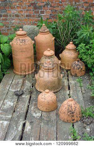 Terracotta Rhubarb Forcing Jars