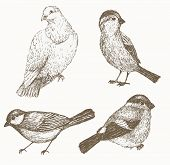 Постер, плакат: Bird set Hand drawn