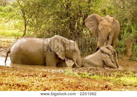 Elefanten-Baby braucht Hilfe