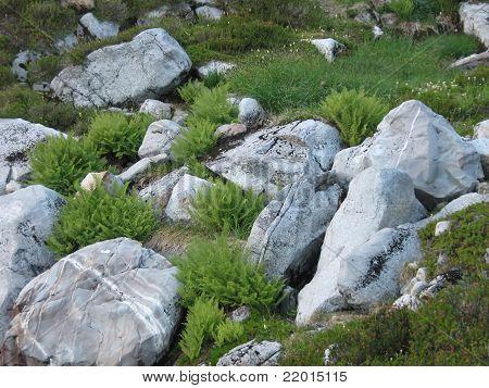 Rocas y hierba