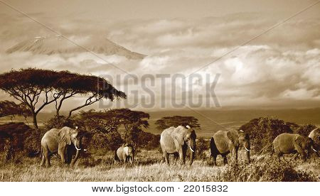 sepia of elephant herd in front of Mt. Kilimanjaro