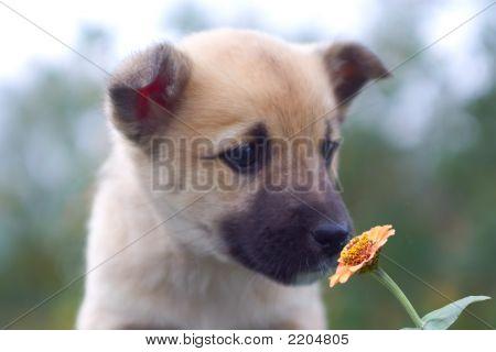 Puppy Dog Smelling Flower 1