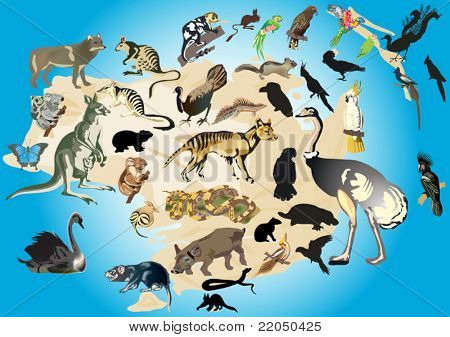 illustration with Australia fauna