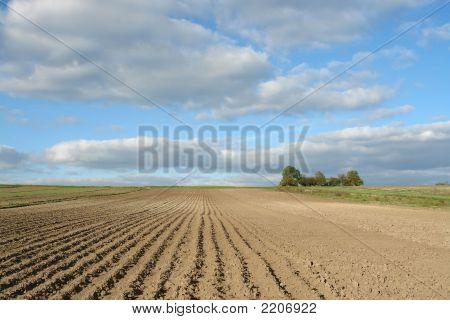 Campo cultivable