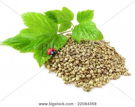 Hemp Seeds, Twig And Ladybug Isolated