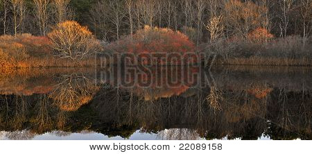 Pond reflection of Autumnal trees