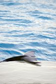 picture of cetacea  - Image of a dolphin tail on a swimming pool