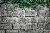 Grey stone wall consisting of massive bricks and braided with climbing plants. Geometric rectangular poster