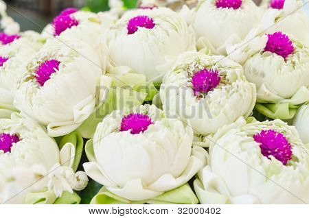 White Lotus And Glob-amaranth Comoran Flower