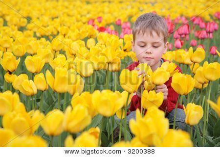 Boy On Field Of Tulips