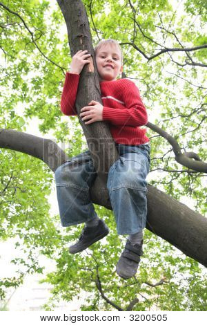 Boy Sits On Branch