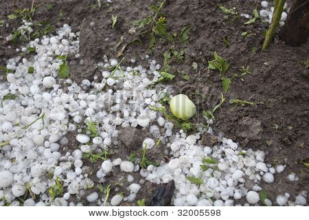 Hail Storm Disaster In Garden