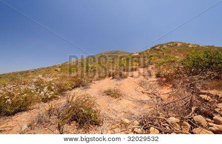 Vegetation Along A Desert Mountain Trail