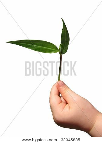 Child's hand holding Seedling