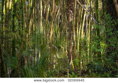 Bamboo Forest With Palm Trees