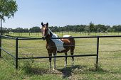 A Beautiful Brown And White Horse Standing Behind A Metal Pipe Fence In A Rural, Ranch Pasture With  poster