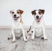Smiling dogs and cat at white background. Two happy cute dogs with kitten sitting at home poster