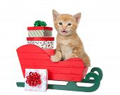 Adorable Orange Ginger Tabby Kitten Sitting In Red And Green Christmas Sleigh With Miniature Present poster