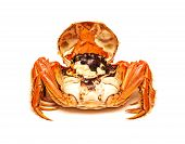 Cooked Chinese Hairy Crab Isolated On White Background poster