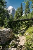 Fallen Larch Tree On A Marked Alpine Trail In Julian Alps In Slovenia With Visible Peaks In Backgrou poster