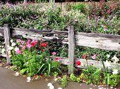 stock photo of english cottage garden  - Cottage Garden 2 - JPG