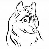 Portrait Of A Wolf. Black And White Illustration Of A Wild Wolf. Linear Art. Forest Predatory Animal poster