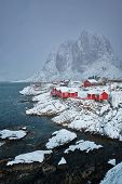 Iconic Hamnoy fishing village on Lofoten Islands, Norway with red rorbu houses. With falling snow in poster