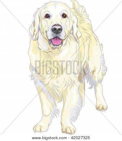 Vector bosquejo perro amarillo de la pistola de raza Labrador Retriever