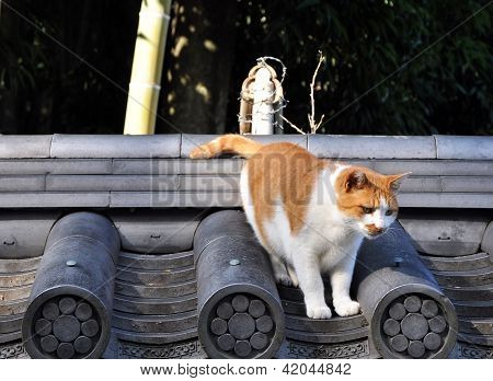 Stray Cat On The Roof