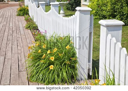 A bright yellow flower in daylily against a white picket fence.