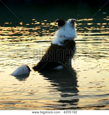 Dog Sitting In The Water