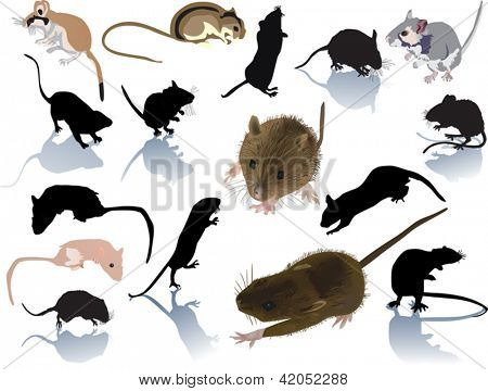 set of rodents isolated on white background
